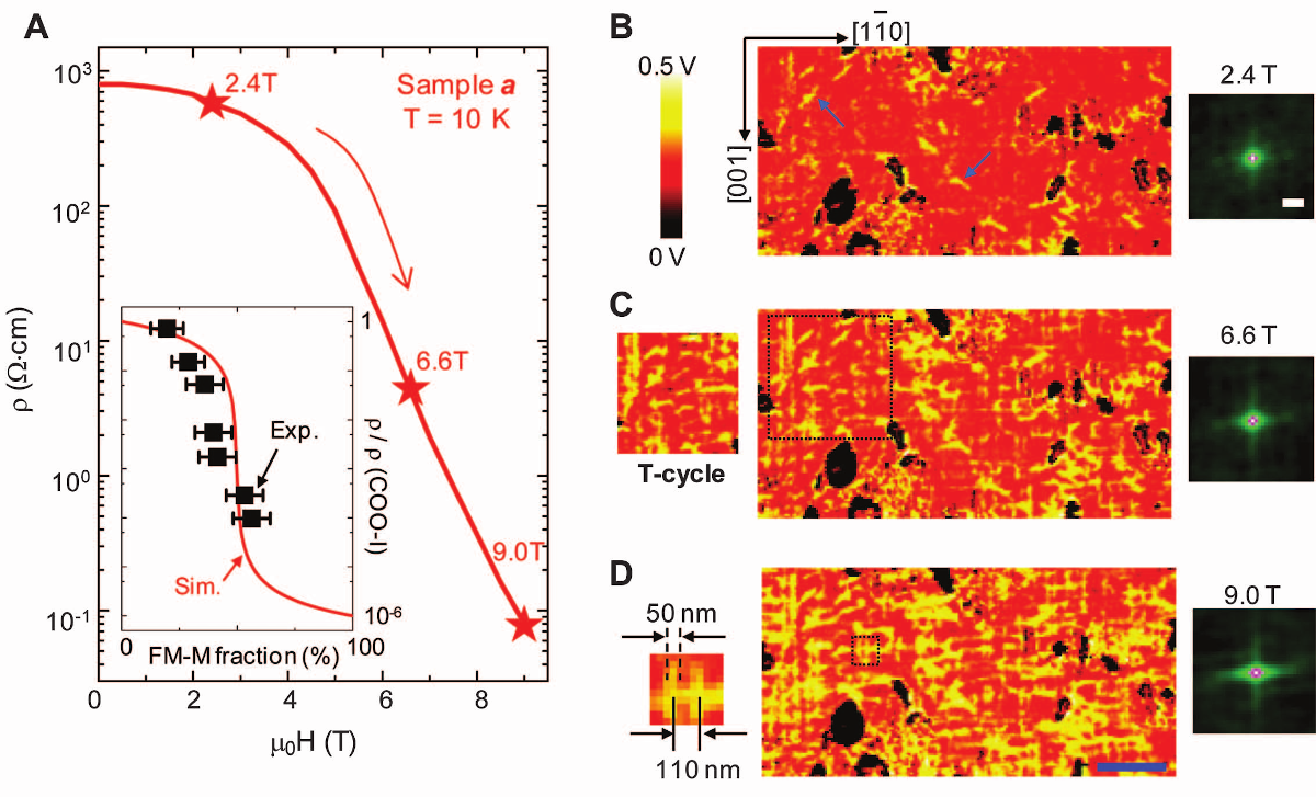 Percolating resistance network in Nd1/2Sr1/2MnO3 thin films.